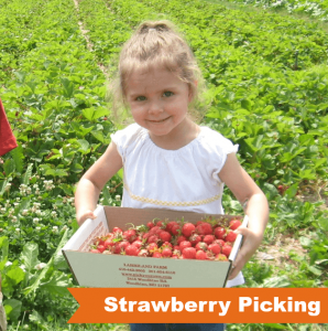 strawberry-picking-compressed