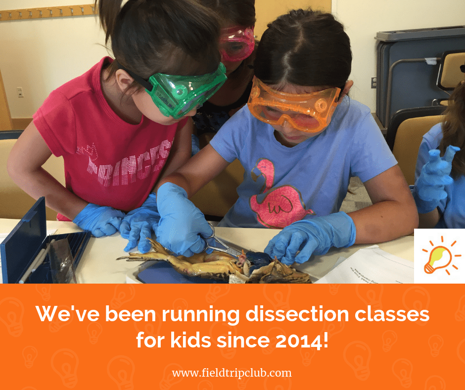 Dissection Classes for kids